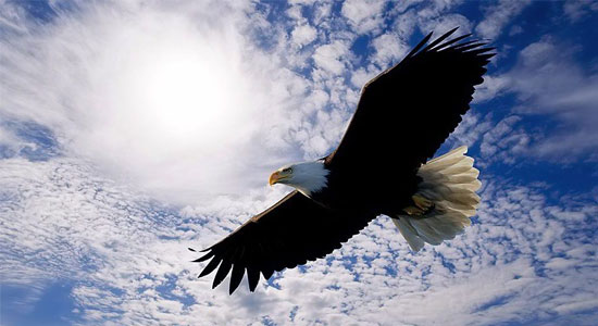 soaring eagle
