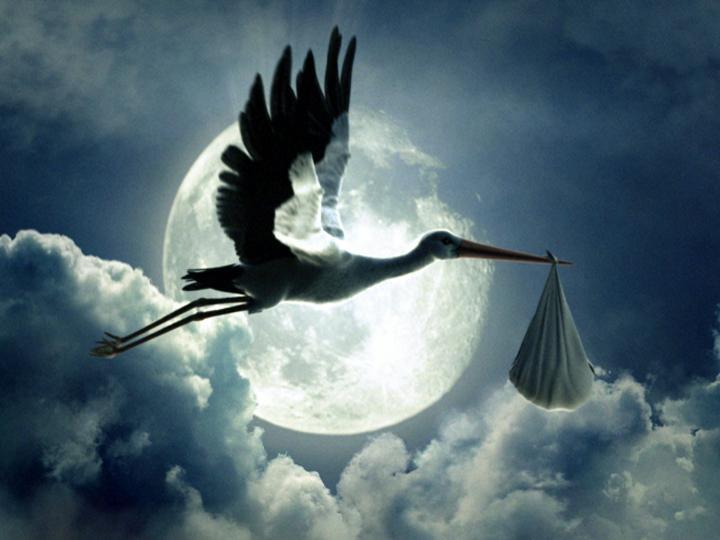 spontaneous stork