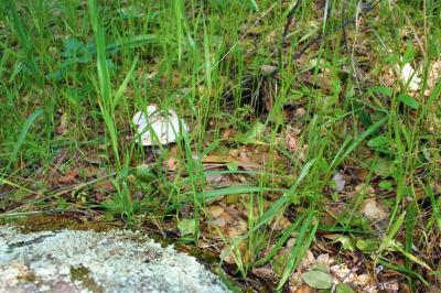 A Wild Mushroom - Nature's Cupcake
